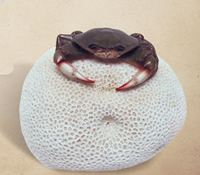 Crab on Coral Sculpture