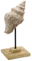 Stone Cast Trumpet Shell on Stand