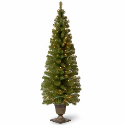 6 Ft. Montclair Spruce Entrance Christmas Tree w/ 150 Clear Lights