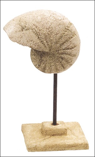Stone Cast Nautilus Shell on Stand